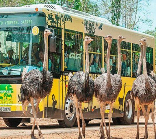 Vườn thú Safari